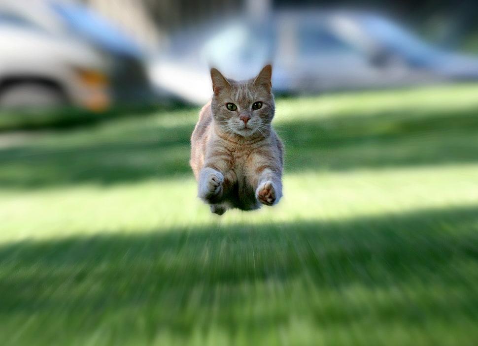 mačke su brže od najbržeg čovjeka